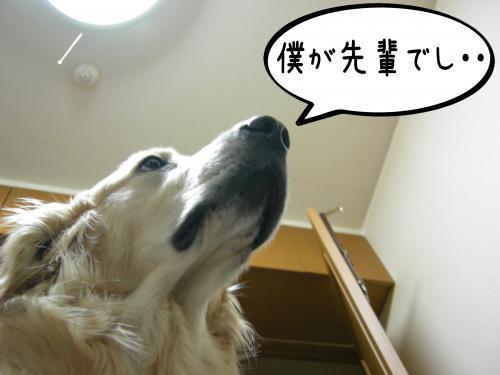 繝�繝ゥ繧オ繧ュ_convert_20110131101458