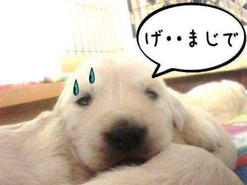 繝�繝ゥ繧オ繧ュ2_convert_20110131101644