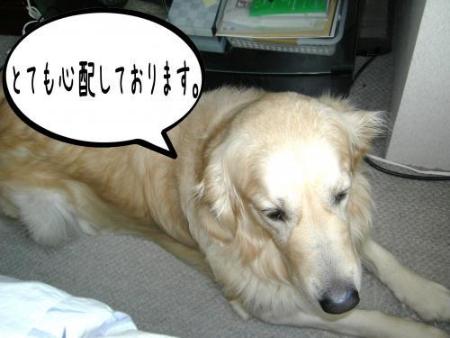 繝�繧ヲ繝ウ2_convert_20110208092550