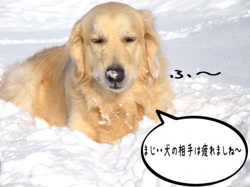 繝ゥ繝ウ7_convert_20110221105934