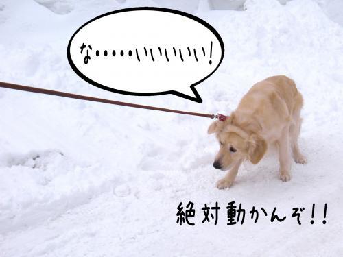 蟶ー繧峨↑縺・_convert_20110221125812