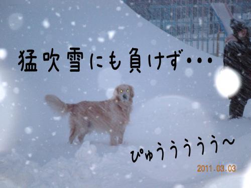 譯・_convert_20110303144520