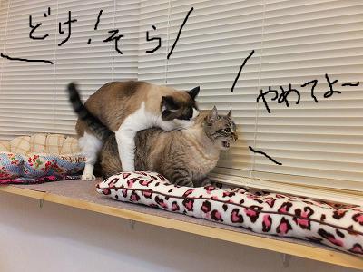 snap_kaisora921_2012126123150.jpg