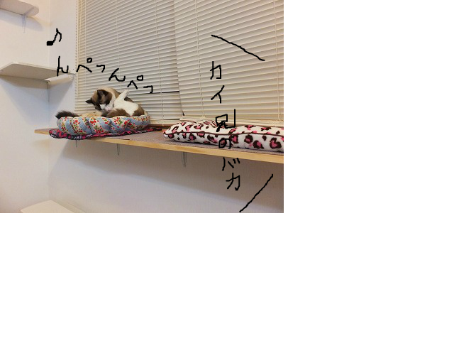 snap_kaisora921_2012126123553.jpg
