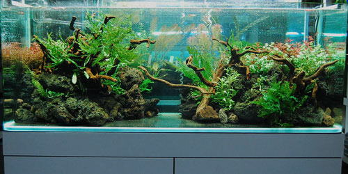 120cmレイアウト水草水槽