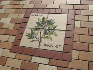 山口県 夏みかんの花