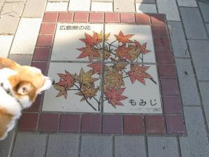 広島県もみじ
