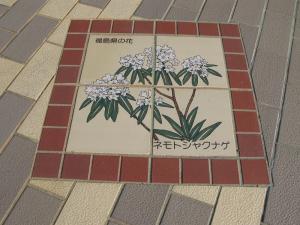 福島県ネモトシャクナゲ