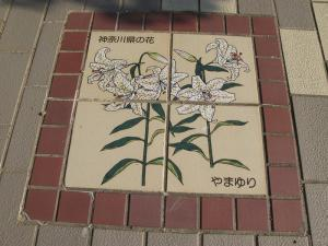 神奈川県やまゆり