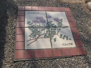 岐阜県れんげ草