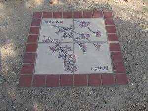 京都府しだれ桜