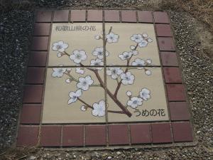 和歌山県うめの花