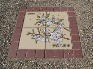 奈良県 奈良八重桜