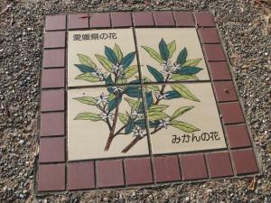 愛媛県みかんの花