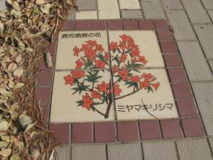 鹿児島県ミヤマキリシマ