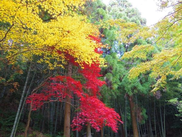 今熊野観音寺10