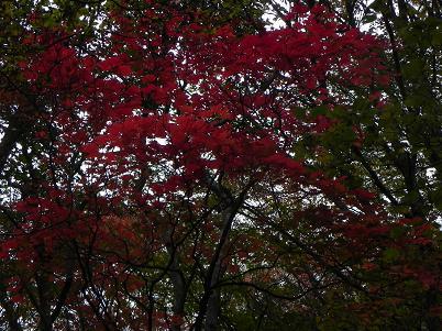 北温泉奥の紅葉1