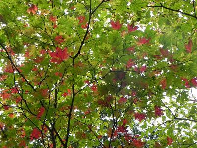 北温泉奥の紅葉2