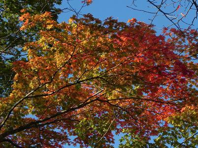 新甲子遊歩道の紅葉