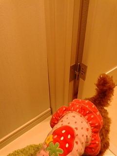 トイレドアの隙間。