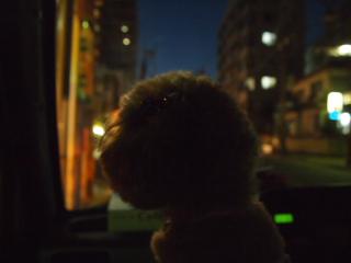 杏ちゃん、大晦日の車の中で。