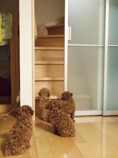 階段が気になる4匹