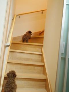 生後100日目。ルルちゃん階段のぼれる。