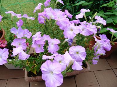 01庭の花