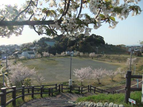 110413sakura.jpg
