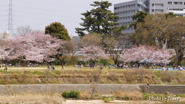 尼崎側の花見