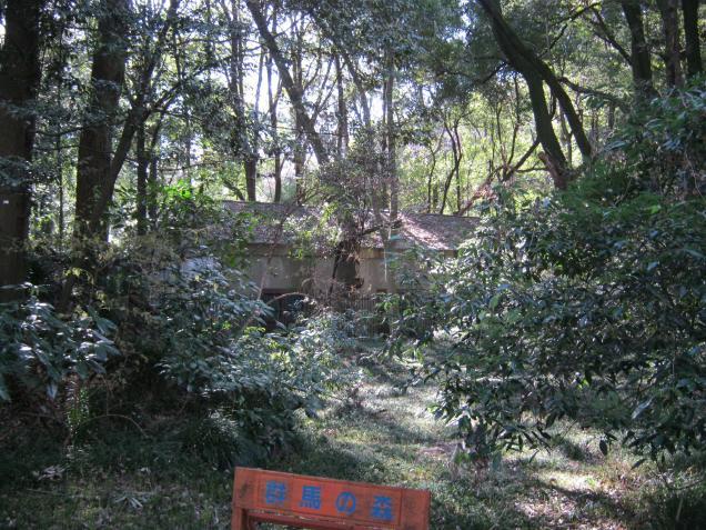 群馬の森 (6)