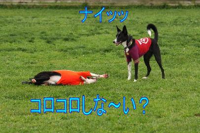 076_20101014141326.jpg