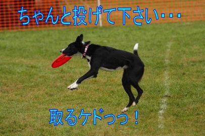 108_20101012083700.jpg
