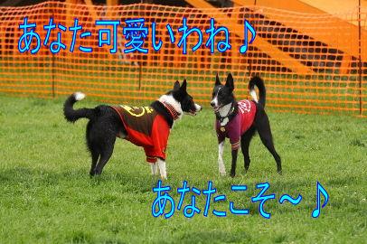 151_20101014140933.jpg