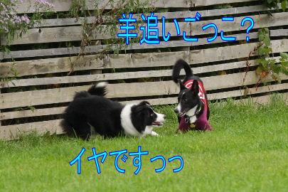 176_20101014141721.jpg