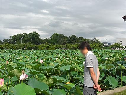 猿賀公園 北限に観る蓮の花まつり 鏡ヶ池(蓮の花と旦那くん)