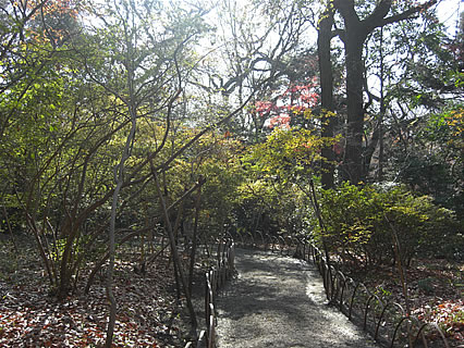 明治神宮 御苑の小径