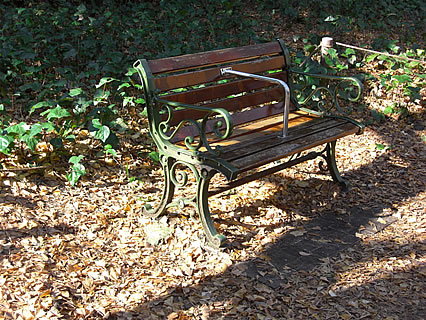 明治神宮外苑 いちょう並木 ベンチ