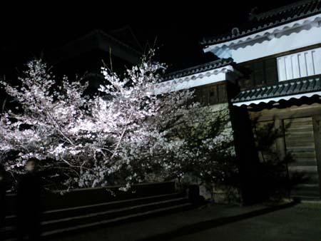 上田城夜桜1