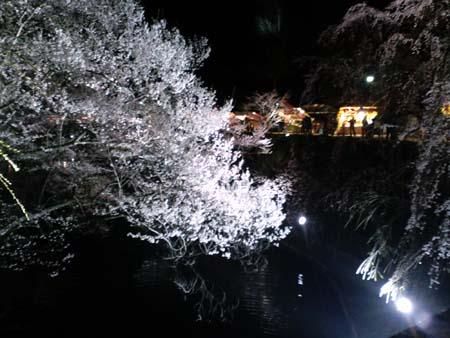 上田城夜桜2