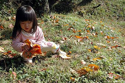 柿の葉集め