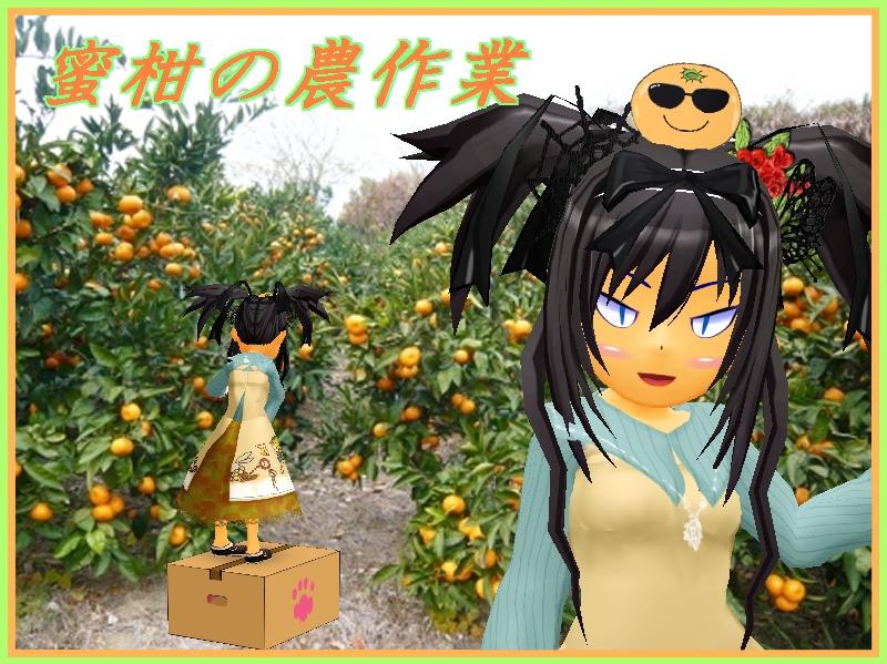 蜜柑の農作業