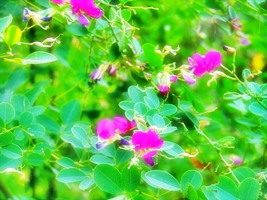 あの日見たひまわりの花を忘れない♪