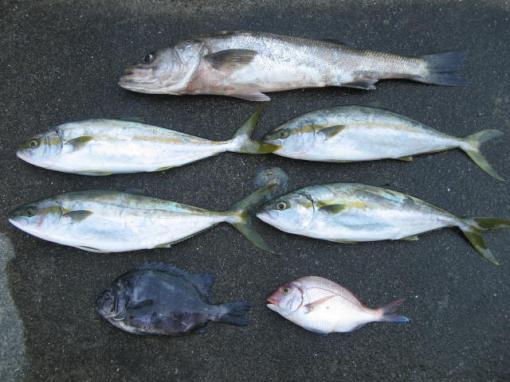 2010 7 24釣果1