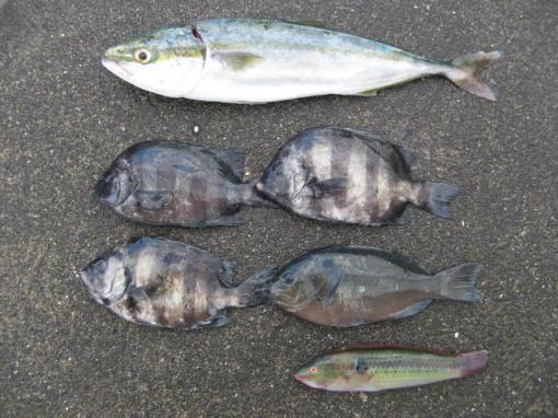 2010828 釣果