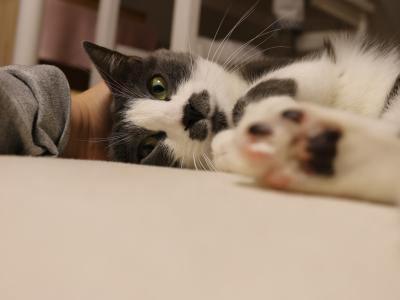 私はブログ猫♪