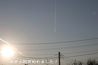 P1050075.jpg