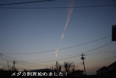 P1050077.jpg