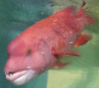 非魚の排除に限定された存在