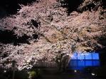 弘前城の夜桜